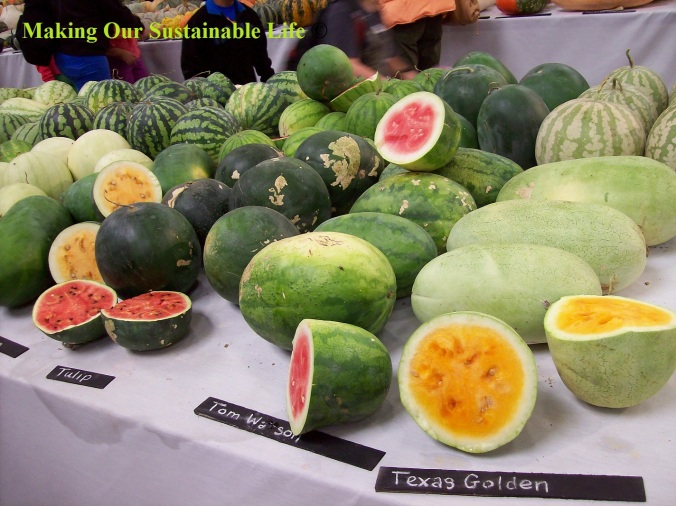 heirloom expo melons